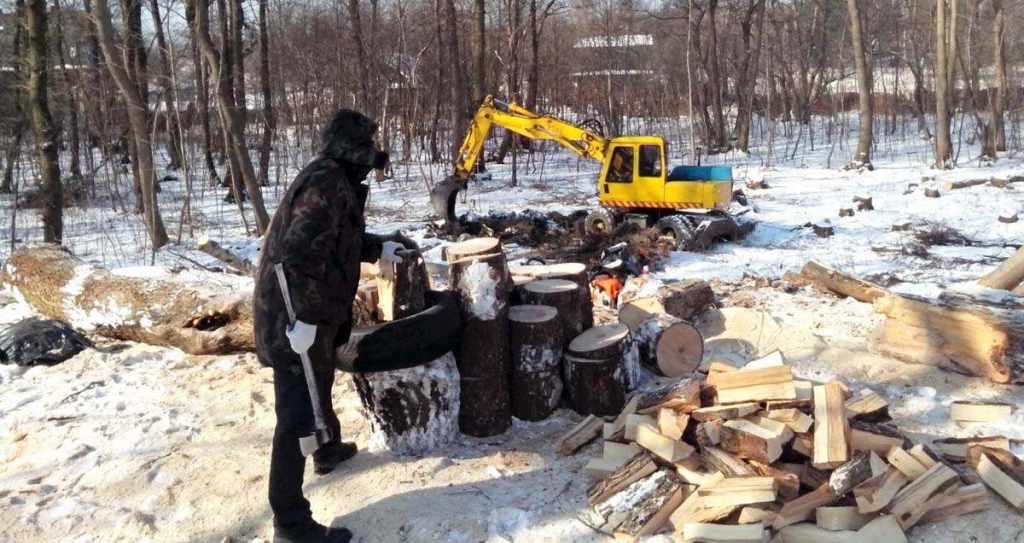 вырубка деревьев в Балтийске