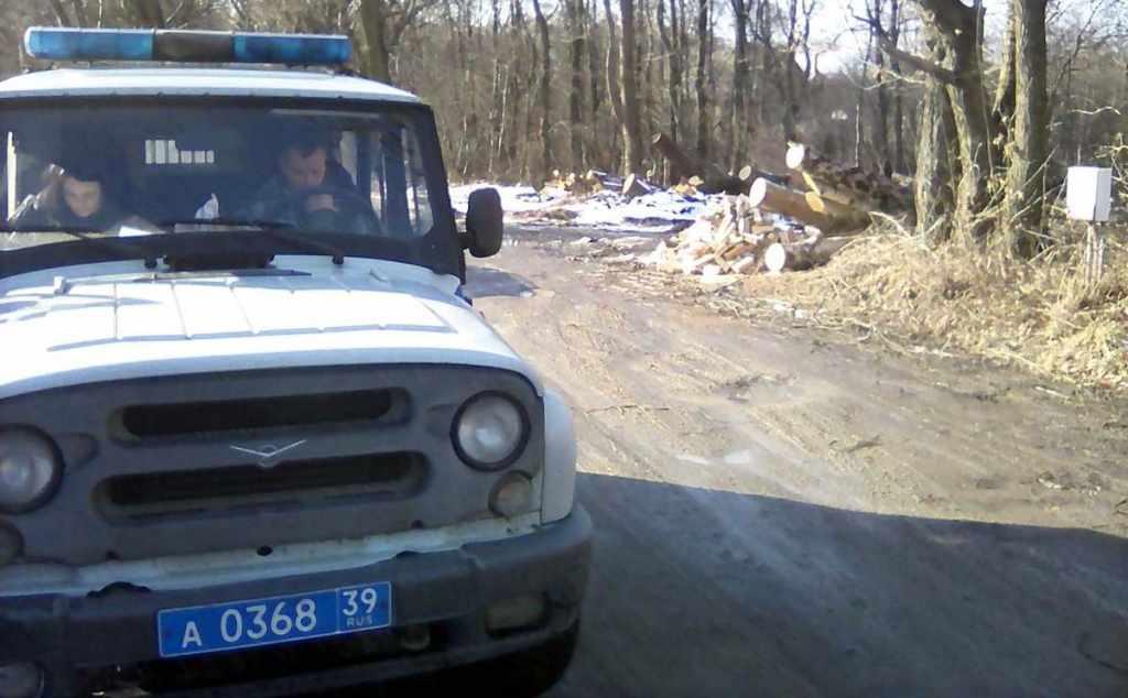 полиция вырубка деревьев