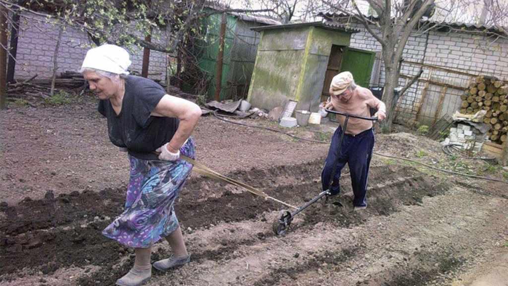 пенсионеры пашут
