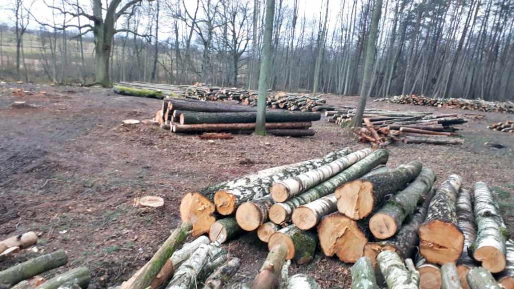 незаконная вырубка леса Краснознаменский район