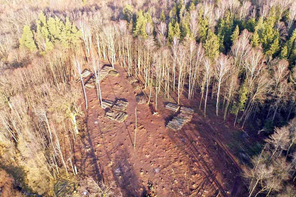 нелегальная вырубка деревьев Краснознаменский район
