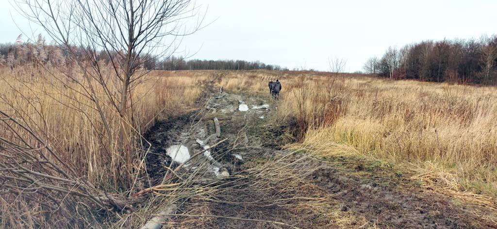 залитое дерьмом поле в Мельниково