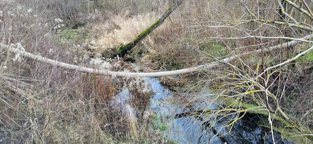 отравленный ручей в пос. Мельниково
