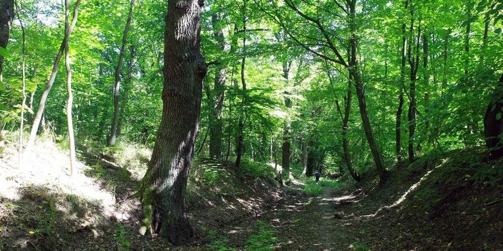 """Суздальский лес, Калининград, """"просто бурьян"""""""